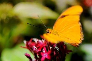 http:  taishimizu.com pictures butterflies nikon 105mm f4 macro micro butterfly 1 thumb.jpg
