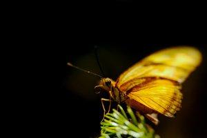http:  taishimizu.com pictures butterflies nikon 105mm f4 macro micro butterfly 2 thumb.jpg