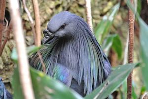 http:  taishimizu.com pictures nikon j1 review Nikon J1 30 110 bird thumb.jpg