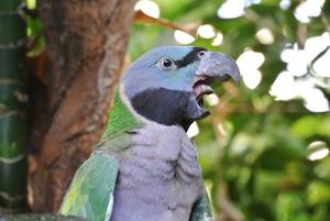 http:  taishimizu.com pictures nikon j1 review Nikon J1 30 110 bird2 thumb.jpg