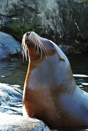 http:  taishimizu.com pictures nikon j1 review Nikon J1 30 110 seal thumb.jpg