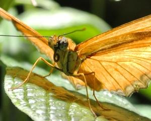 http:  taishimizu.com pictures nikon j1 review nikon j1 butterfly thumb.jpg