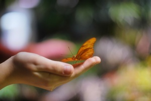 http:  taishimizu.com pictures nikon nikkor s 50mm f1 4 non ai butterfly hand thumb.jpg