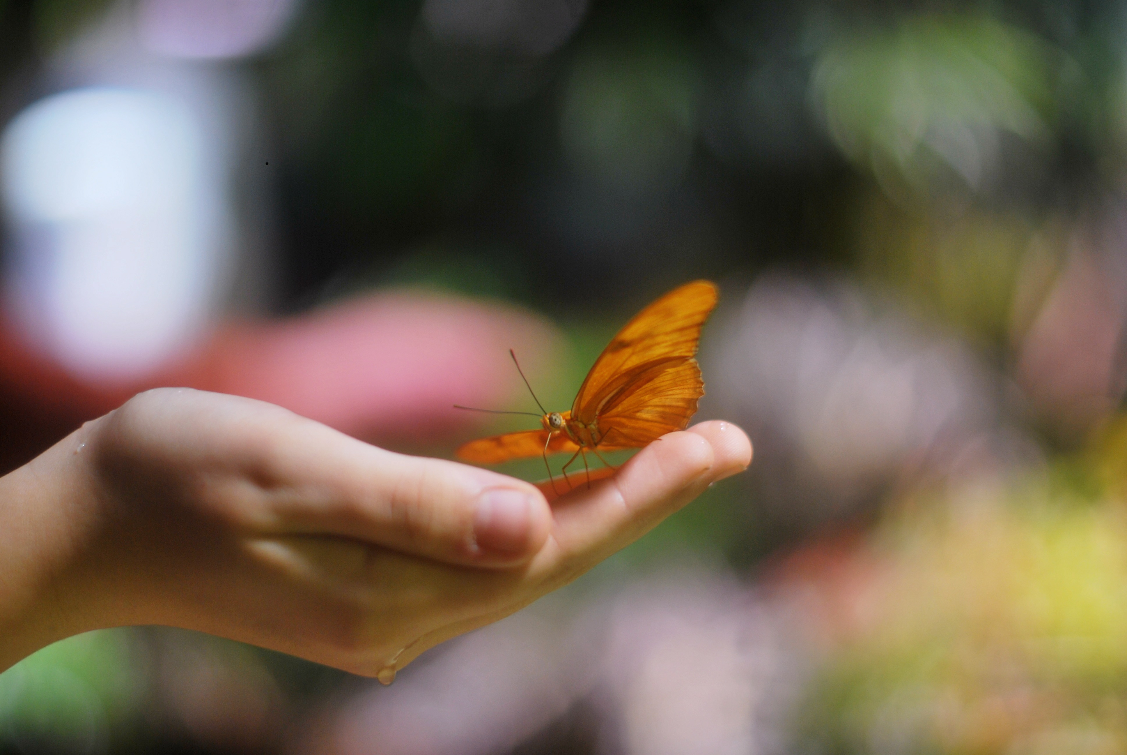 Uncategorized Butterfly Hand tai shimizu http taishimizu com pictures nikon nikkor s 50mm f1 4 non ai butterfly hand