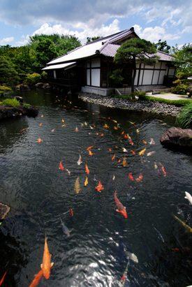 http:  taishimizu.com pictures tokina 11 16mm f2 8 nikon f mount review himeji gardens pond thumb.jpg